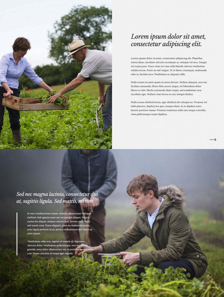 Black Swan Site Designs - About Us page concept